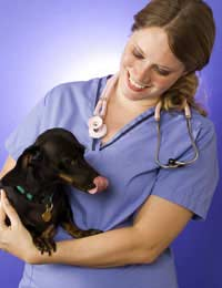 Neutering Options For Rescue Pets